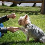 ¿Qué diferencias hay entre un etólogo canino y un adiestrador? - Pets 4 Good