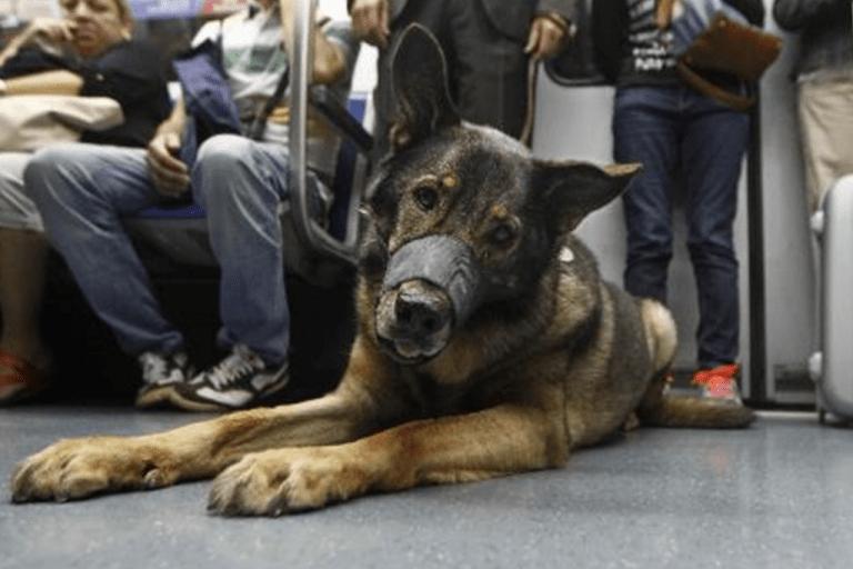Todo lo que necesitas saber para viajar en Metro con tu perro - Pets 4 Good