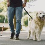 Perros de asistencia - Pets 4 Good